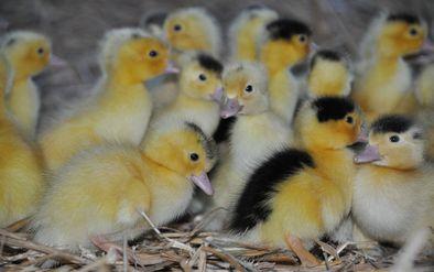 La ferme en Castéra -
