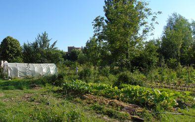 Jardin potager -