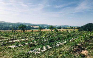 La ferme des Mawagits -